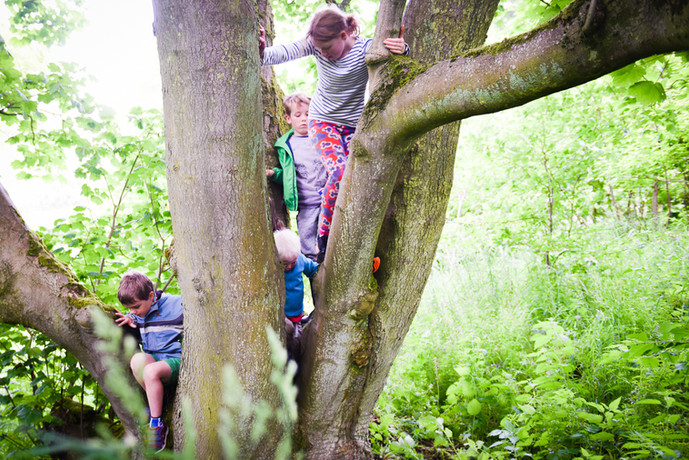 If a tree's worth climbing ...