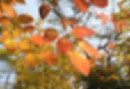11-3-秋の森-5.jpg