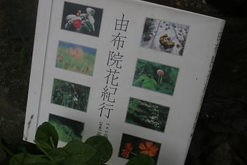 book19-8-13 002.JPG