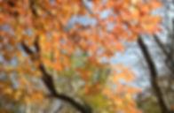 11-3-秋の森-4.jpg