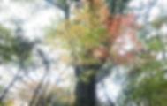 11-3-秋の森-1.jpg