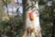 11-3-秋の森-6.jpg