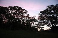 森へ行く道46_0513_01.jpg
