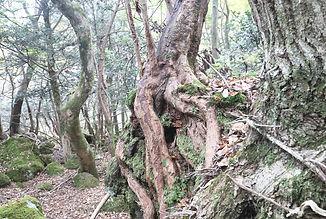 11-3-秋の森-3.jpg