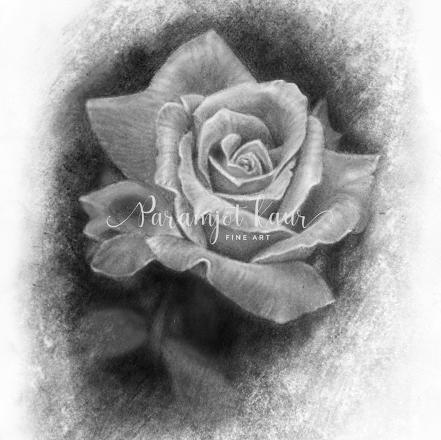 Charcoal and graphite artwork of a single rose against black