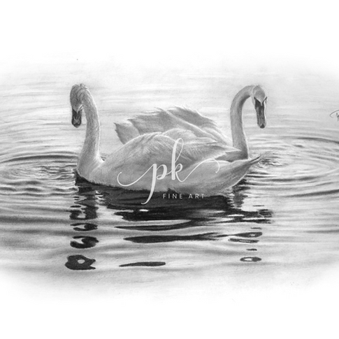 A romantic graphite drawing of two swans together against rippling waves of a pond