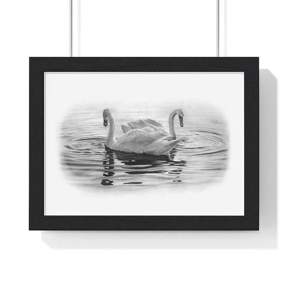'A Quiet Day' Premium Framed Swan Print