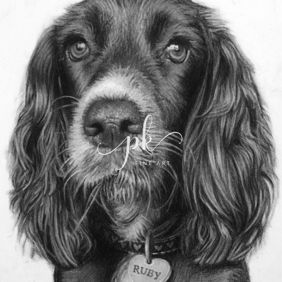 A charcoal portrait of a black Cocker Spaniel dog with glossy hair