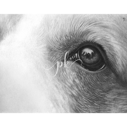 A close-up drawing of a Beagle dog's eyes looking out into the world