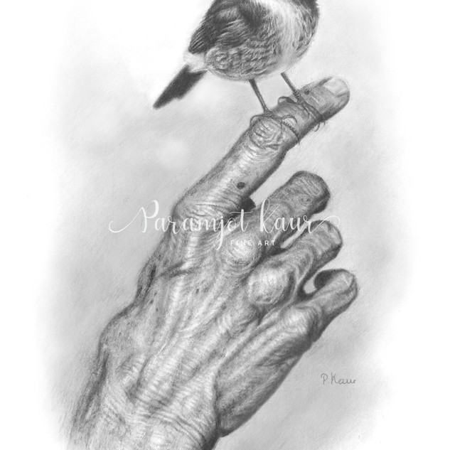 Pencil drawing of a small bird perched on on an old, wrinkled hand