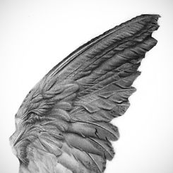 Details of angel wing pencil drawing by