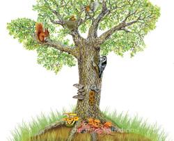 la fauna in una quercia