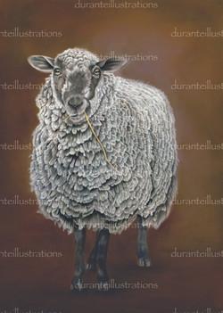 mi disegni una pecora?