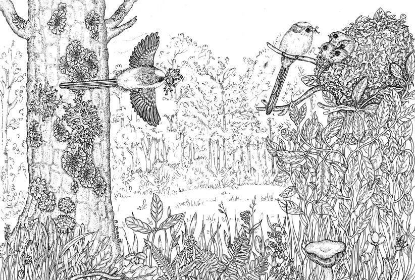 bosco con nido