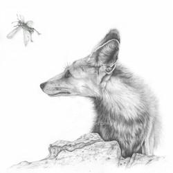 Fox in Sinai