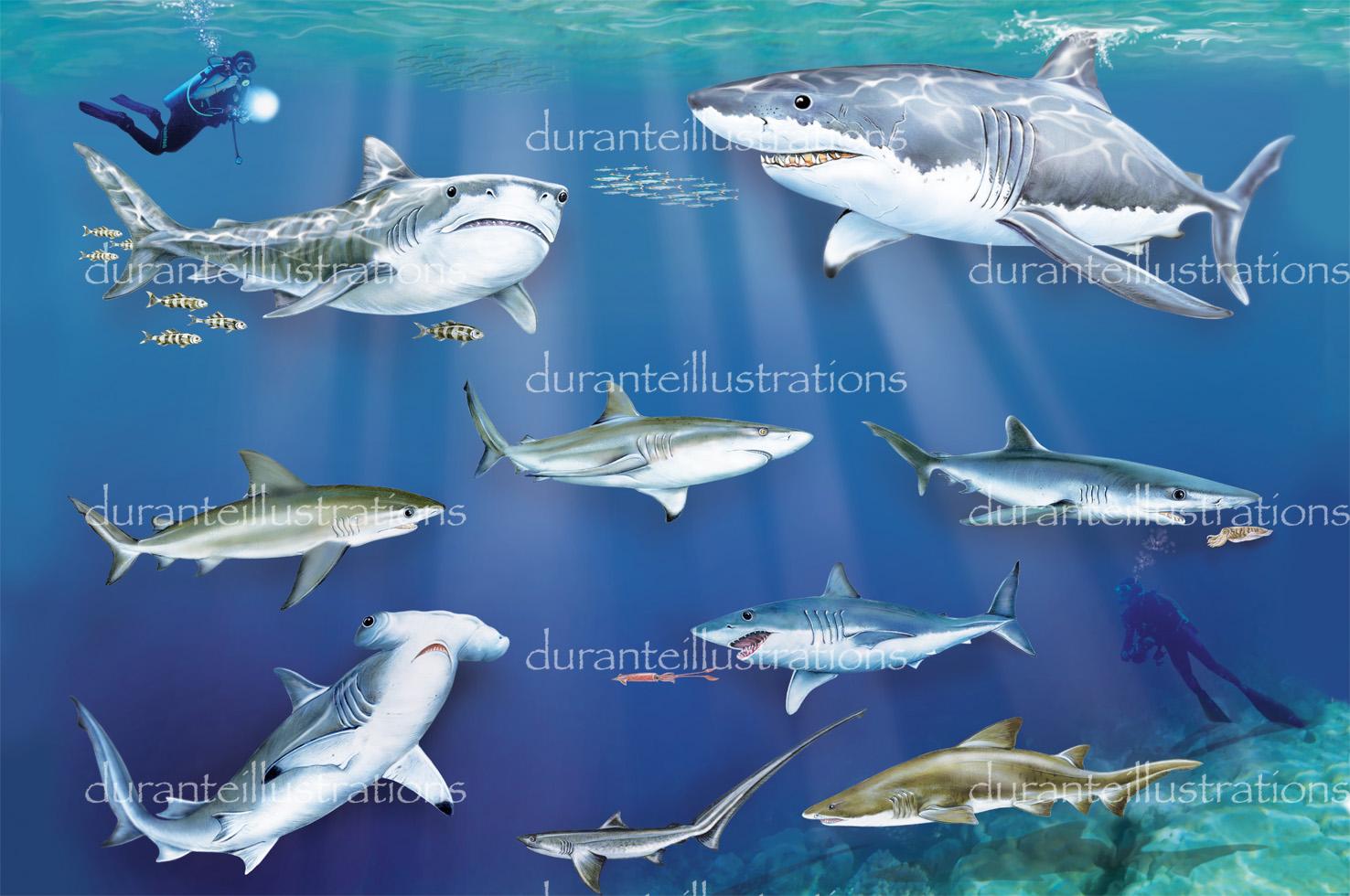 squali