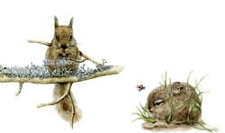 scoiattolo, leprotto