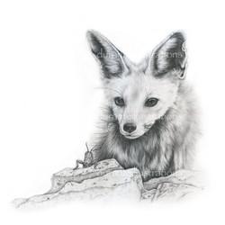 fox and locust
