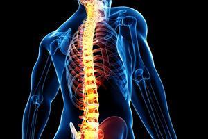 Prise en charge de cours d'examen orthopédique
