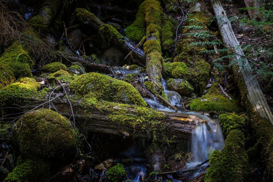 Moss World