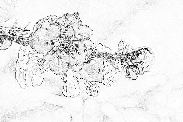 桃の花下絵.jpg