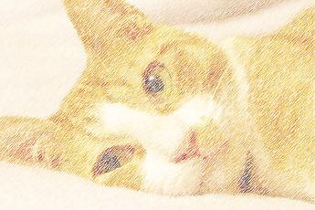 猫サンプル