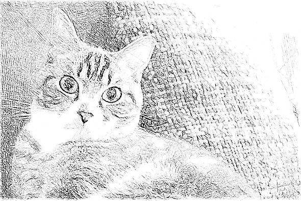 猫下絵2.jpg