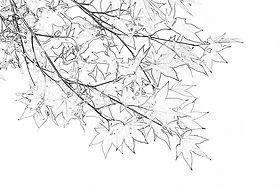 お花植物 塗り絵を無料ダウンロード おとなの塗り絵倶楽部