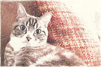 猫サンプル2.jpg