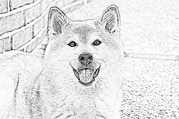 犬下絵2.jpg