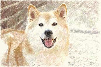 犬サンプル2.jpg