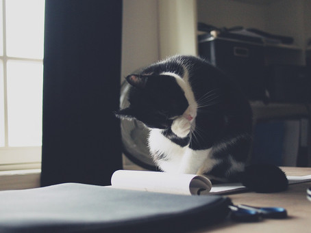 How to Help Your Cat Adjust to Your Post-Pandemic Work Schedule