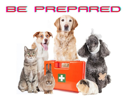 Save Your Pet's Life: Properly Stock a Pet Emergency Kit
