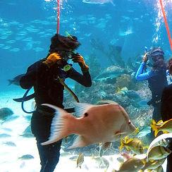 swim-in-the-aquarium_edited.jpg