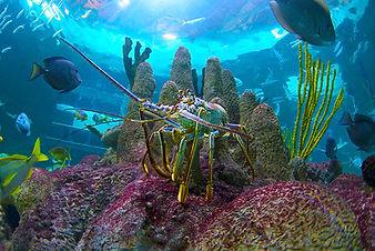 Lobster, Coral, and Tropical Fish at Florida Keys Aquarium Encounters