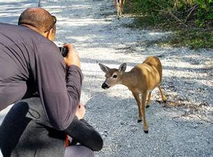 Key Deer and Photographer on Florida Keys Tour