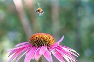 Blume-Biene.jpg