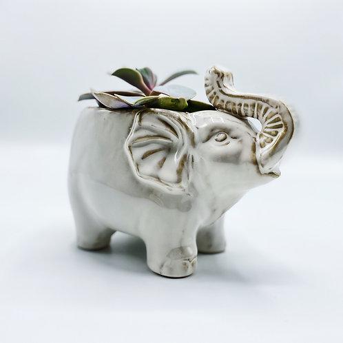 Large Elephant Pot