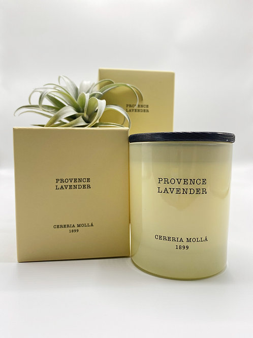 Provence Lavender 8oz Candle