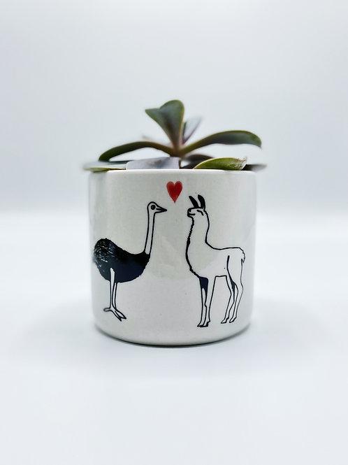Unlikely Friends Llama & Ostrich