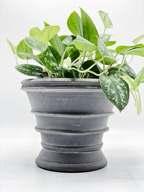 Europa #4 Gray Planter