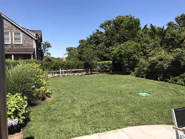 back yard 3.jpg