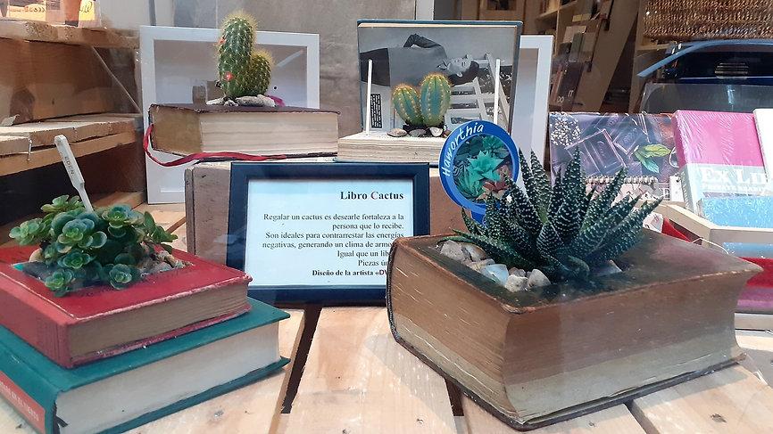 escaparte cactus.jpg