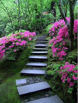 sumo's garden