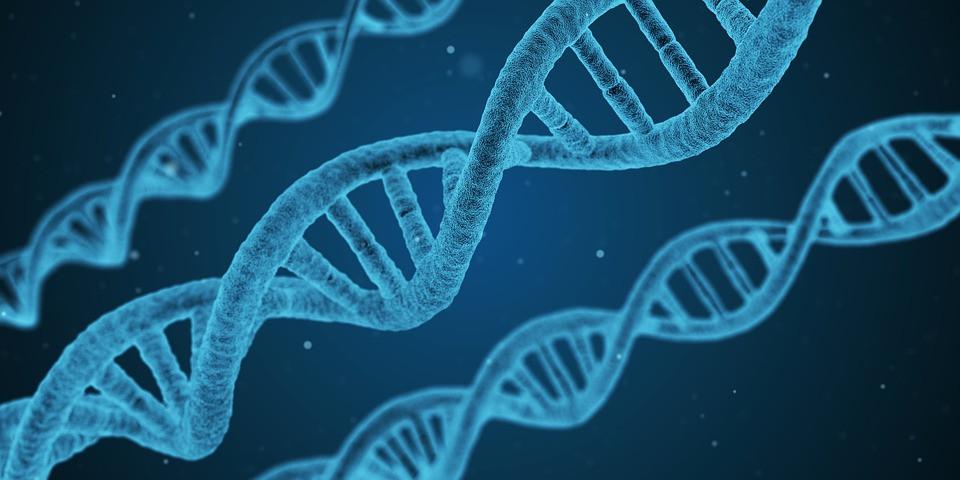 Transzgenerációs emlékezet, genoszociogram