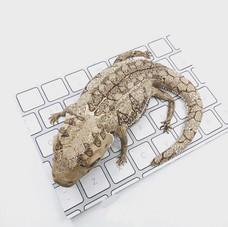 Lizard on keyboard cake