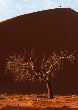 Solitude (Namibia, Dune 45)