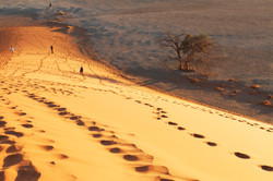 Footprints (Namibia, Dune 45)