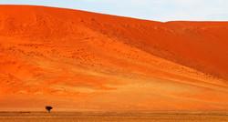 Solitude (Namibia, Sossuvlei)