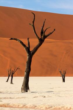Stillness (Namibia, Deadvlei)